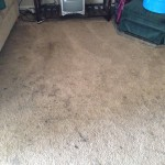 Puyallup-Dirty-Carpet