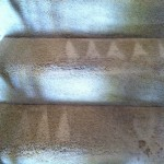 Puyallup-Stairs-Carpet-Cleaning