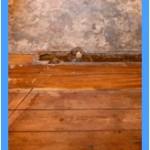 Wall-Mold-Removal-Puyallup